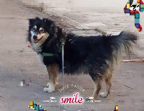 Gli auguri del cane